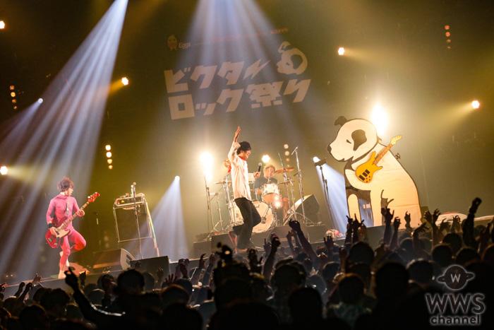 【ライブレポート】四星球、野菜・肉・魚に扮してにコミカルにステージに登場!<ビクターロック祭り2019>
