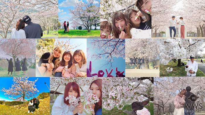 MACO、桜の写真で制作された最新シングル「桜の木の下」のスペシャルムービーが完成