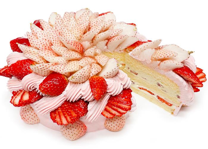 ≪カフェコムサ≫毎月22日がショートケーキの日!2月は「白いちご」と「おすすめのいちご」を使用した限定デザインのショートケーキを発売